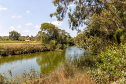 Stream Alexander with eucalyptus trees along the banks against blue sky with clouds. Israel