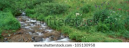 Stream and Alpine Flowers, Ouray, Colorado