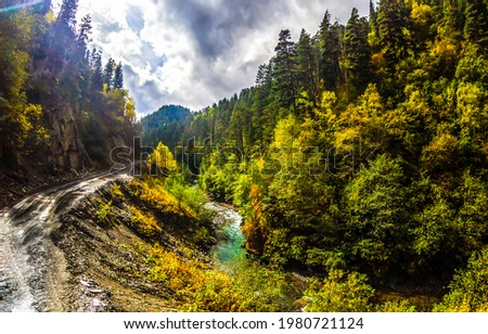 Stream and trail in the mountain forest. Autumn mountain forest landscape. Autumn in mountain forest