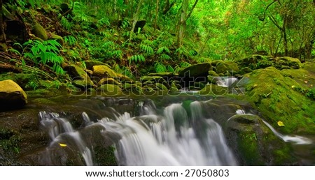 Stream Flowing Through Lush Jungle, Maui, Hawaii
