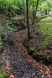 Stream in Epping Forest, Essex, England, United Kingdom UK