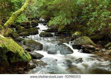 Stream in Killarney National Park - Ireland