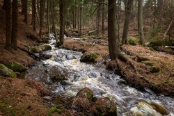 Stream in the forest. Small river in the forest in spring. Boulders in the river. River foam. Spring. Close-up. High quality photo
