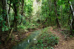 Stream in the tropical forest