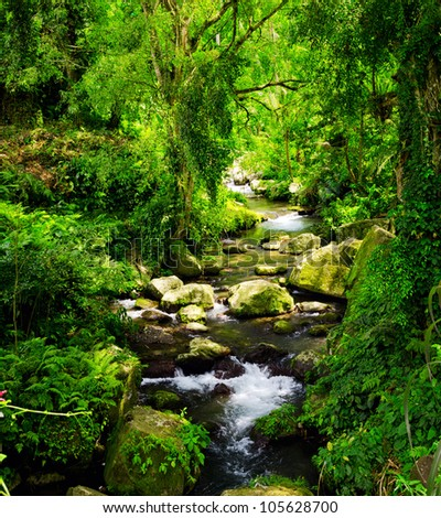 Stream in the tropical forest.
