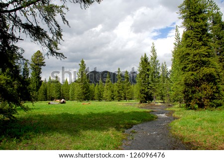 Stream Meanders Through Alpine Valley In Yellowstone National Park