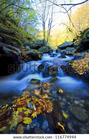stream river in autumn