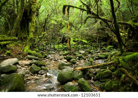 Stream running in the mossy forest