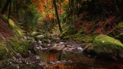 Stream with orange water flowing in rocky gorge, in autumn woodland.Vibrant and colourful nature scene.Fairytale landscape scenery in forest of Scottish Highlands.