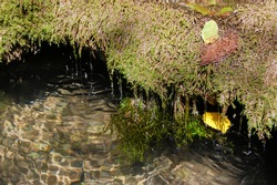 Streams of water flow from the mossy shore into the reservoir