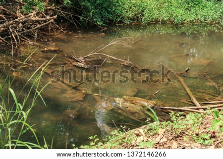Streams, rivers, streams, in the forest, parks