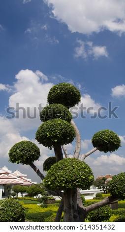 Streblus asper clear blue sky #514351432