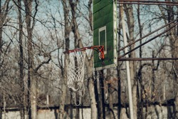 street basketball hoop on tree branches