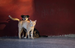 Street cat and dog being friendly to each other.