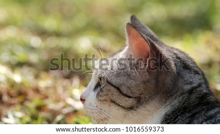 Street cat as background / The domestic cat is a small, typically furry, carnivorous mammal. #1016559373