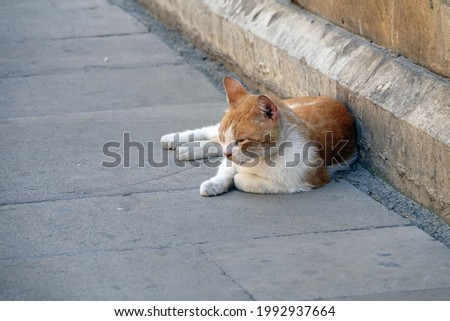 Street Cat in Baku, Azerbaijan - Ginger Tabby and White Stray Cat Relaxing in the Shade in Old Town Baku