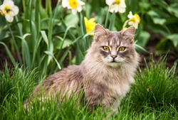 Street cat in  flower bed. Gray fluffy cat is sitting in the green grass.
