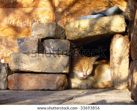 Street cat relaxing in simple shelter