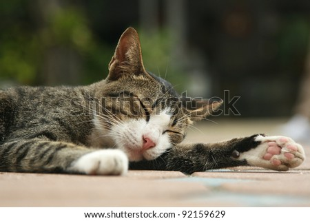 street cat sleeping