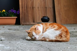 Street cat sleeping on the ground.