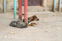 Street cats and a dog lie together.