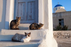 Street cats in Athens, Greece