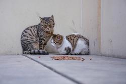 Street cats on the street
