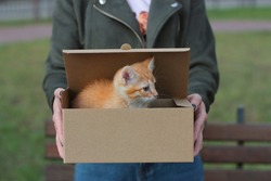 street domestic red kitten sits in a paper box on a woman's knees. Woman in blue jeans and green jacket
