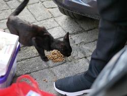 Street homeless cat eats dry food. Help stray animals, feeding.