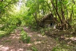 Street in abandoned village Dibrova, post apocalyptic landscape, summer season in Chernobyl exclusion zone, Ukraine