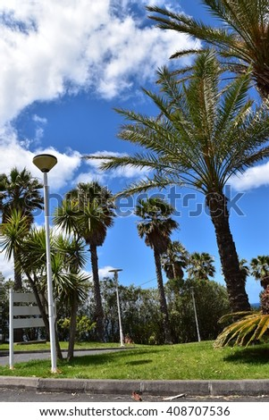 Street lamp with palm trees Foto stock ©