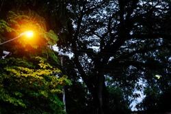 street light pole with siluate tree, city lighting poles off the road, evening landscape, Lamps at night. Lighting in the park under a tree. To be open in the evening, Low key lighting picture.