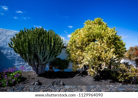 Street view of beautiful residential white stone garden house surrounded by black volcanic soil and huge cactuses with blue spring sky with white clouds, Lanzarote, Canary Islands, Spain #1129964090