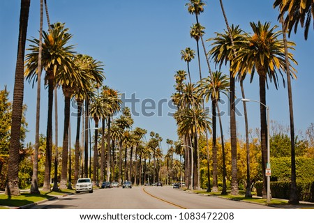 Street with palms in Beverly Hills Stockfoto ©