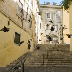 street with pigeons of Lisbon, capital of the Portugal