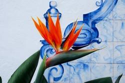 Strelitzia - a beautyful flower of Madeira