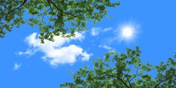 stretch ceiling picture tree branches blue sky clouds