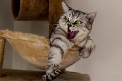 stretching cat in her cat tree