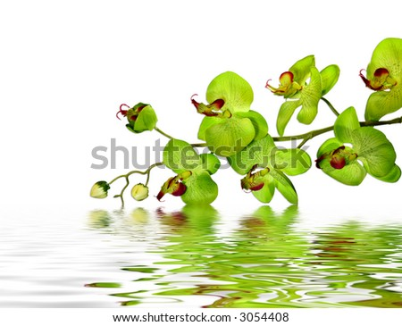 Striking Green Orchid