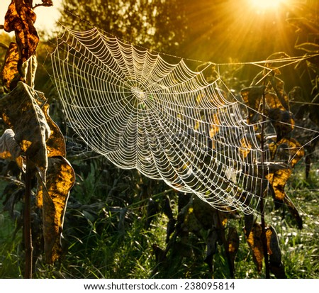 Strings of a spider's web in back light in forest #238095814