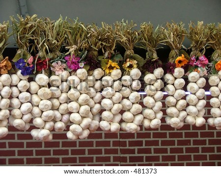 strings of garlic bulbs in front of a brick wall