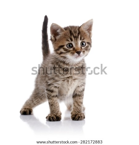 Striped amusing domestic kitten on a white background. - Shutterstock ID 282172883