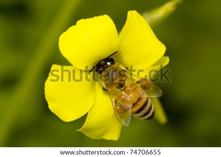 striped bee sitting on a yellow flower - stock photo