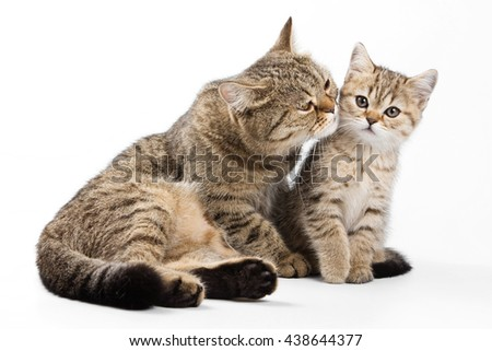 Striped cat and kitten (isolated on white) #438644377
