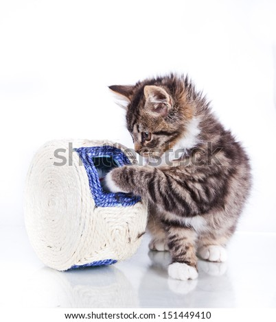 striped cat on a white background, black color marble, cute cat