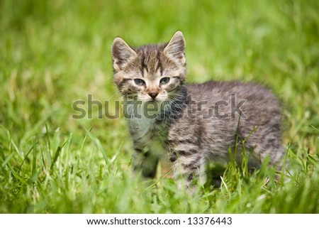 striped cat on the grass