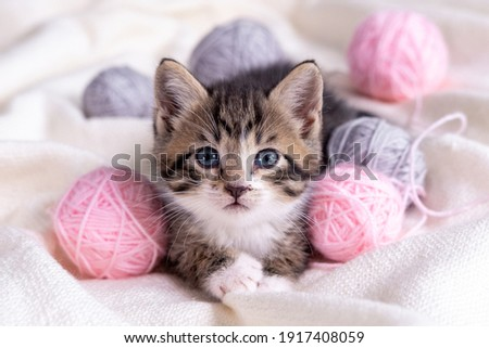 Striped cat playing with pink and grey balls skeins of thread on white bed. Little curious kitten lying over white blanket looking at camera.