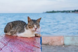Striped Cat Relaxing On The Edge Of Beach Pier