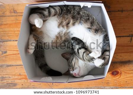 Striped cat sleeping in a cardboard box #1096973741