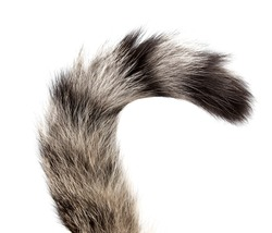Striped cat tail on white background